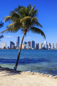 Viedw of Miami skyline and palm tree
